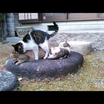 「どうぶつ基金」 夫婦猫と子猫のたわむれ