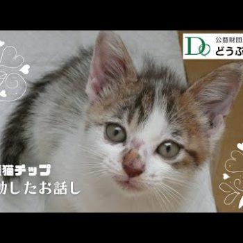 保護猫チップの感動したお話し【どうぶつ基金】いのちつないだ♡ワンニャン写真・動画コンテスト