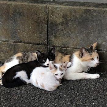 子猫のような母猫とその娘達