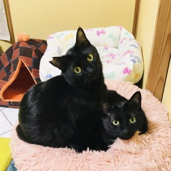 カラダもココロも大きな黒猫男子
