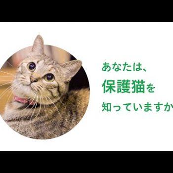 【どうぶつ基金】あなたは、保護猫を知っていますか?