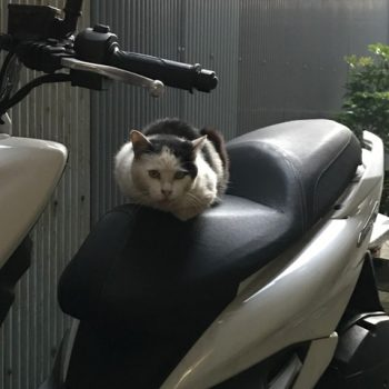かわいそうなノラ猫が居ないかとバイクで市中をみまわる野良猫チビチビ