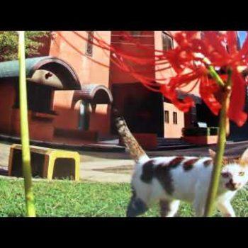 ココロちゃんが語るキャンパス猫の保護活動の歩み