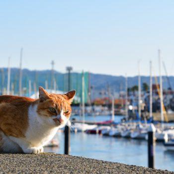 漁港で暮らす
